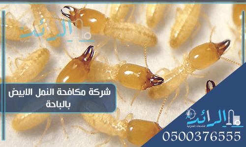 شركة مكافحة النمل الابيض بالباحة